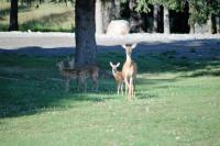 <h2>Disney Brook</h2><p>Park visitors</p>